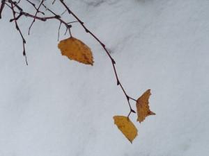 Erster Schnee 2012/2013