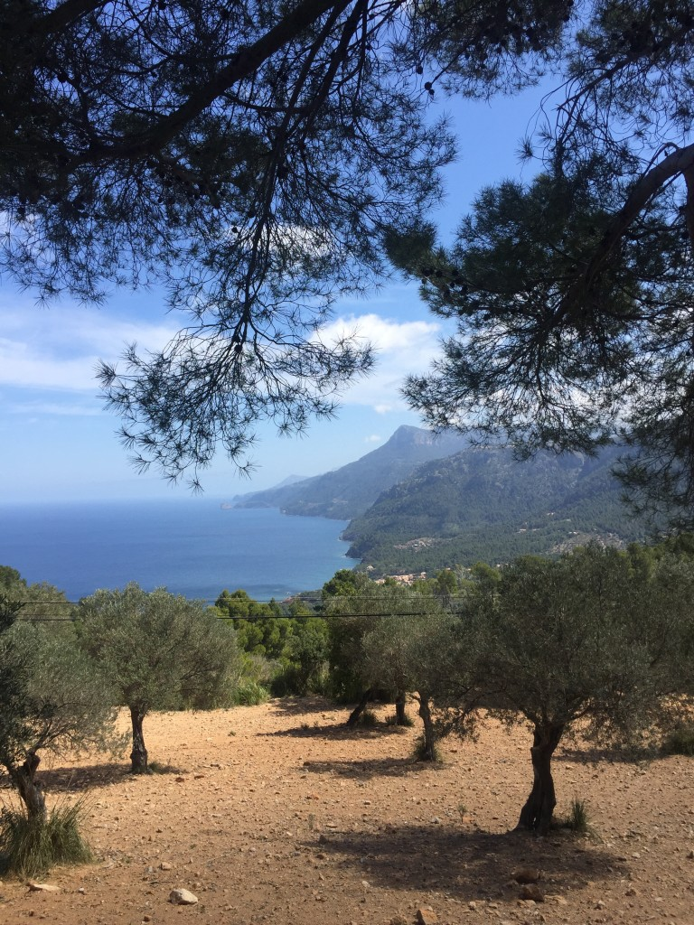 Unterwegs nach banyalbufar auf Mallorca410