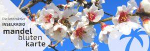 Mandelblütenkarte Inselradio Mallorca