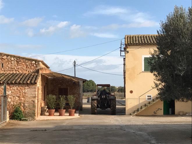 Hof der Käserei Burguera Mallorca