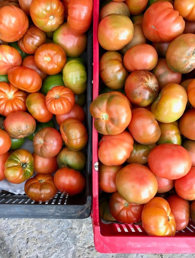 Tomaten in Binissalem Mallorca