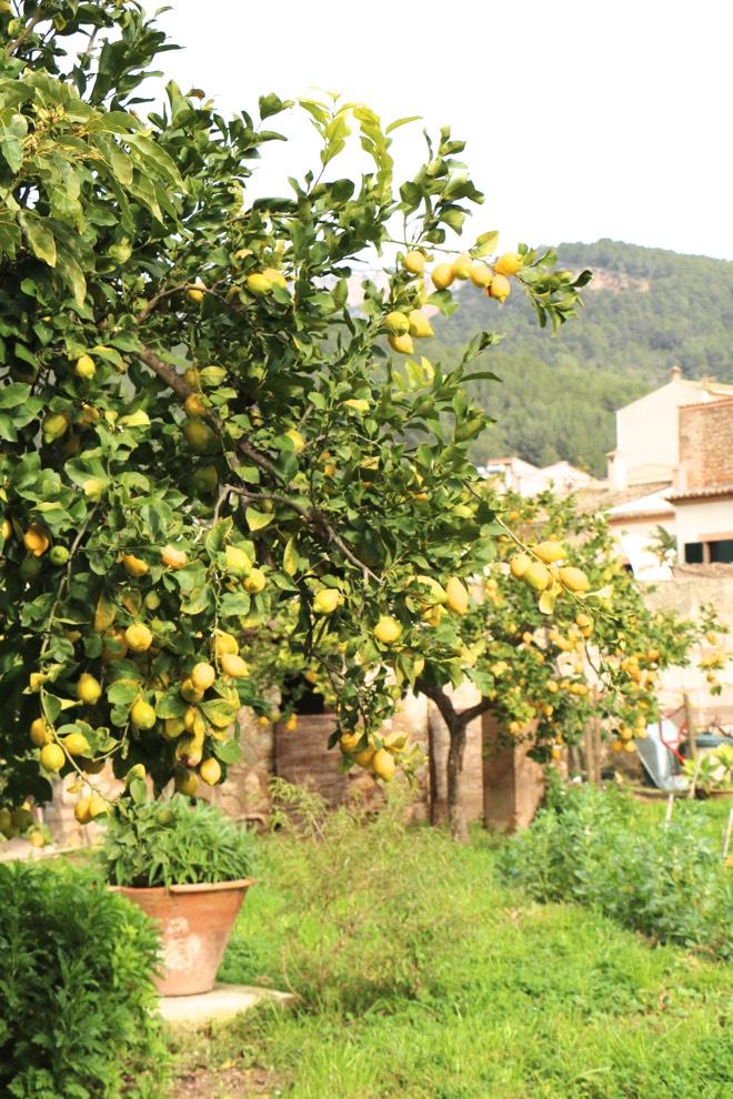 Sa fita Garten mit Zitronenbaum