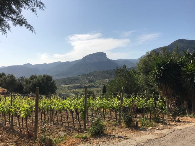 Die Weinberge von Castell Miquel
