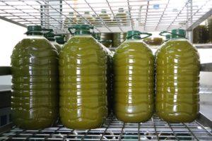 Frische Olivenöl Sa Tafona de Caimari