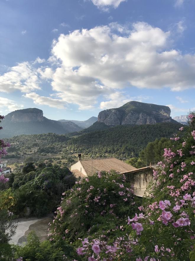 Frühling auf Mallorca Weingüter