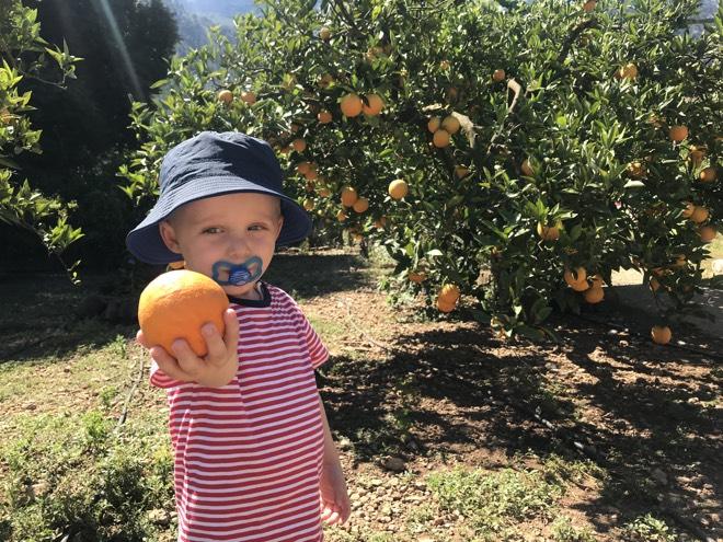 Mallorca mit Kindern Orangen pflücken