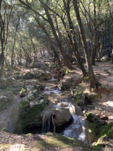 Märchenhafter Wald beim Wasserfall Es Salt des Freu