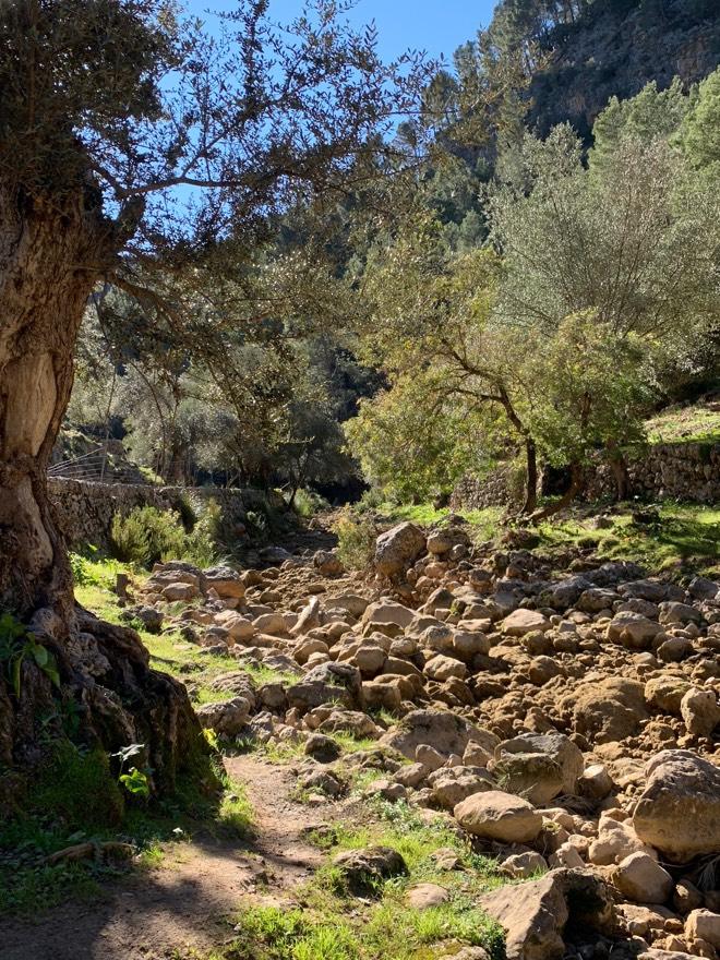 Steinige Wege nach Es Salt des Freu