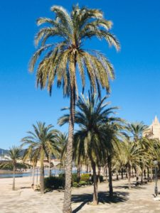 Ostern auf Mallorca 2019