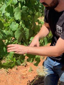 Weingut Son Juliana Mallorca
