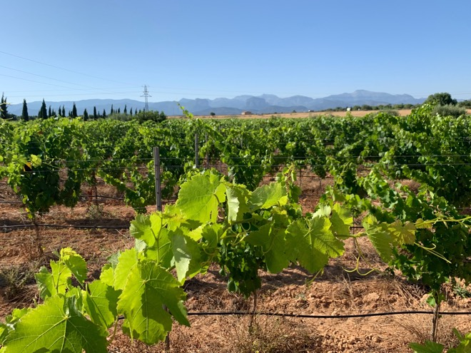 Weingut Son Juliana Mallorca