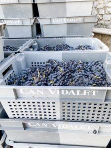 Bodegas Can Vidalet