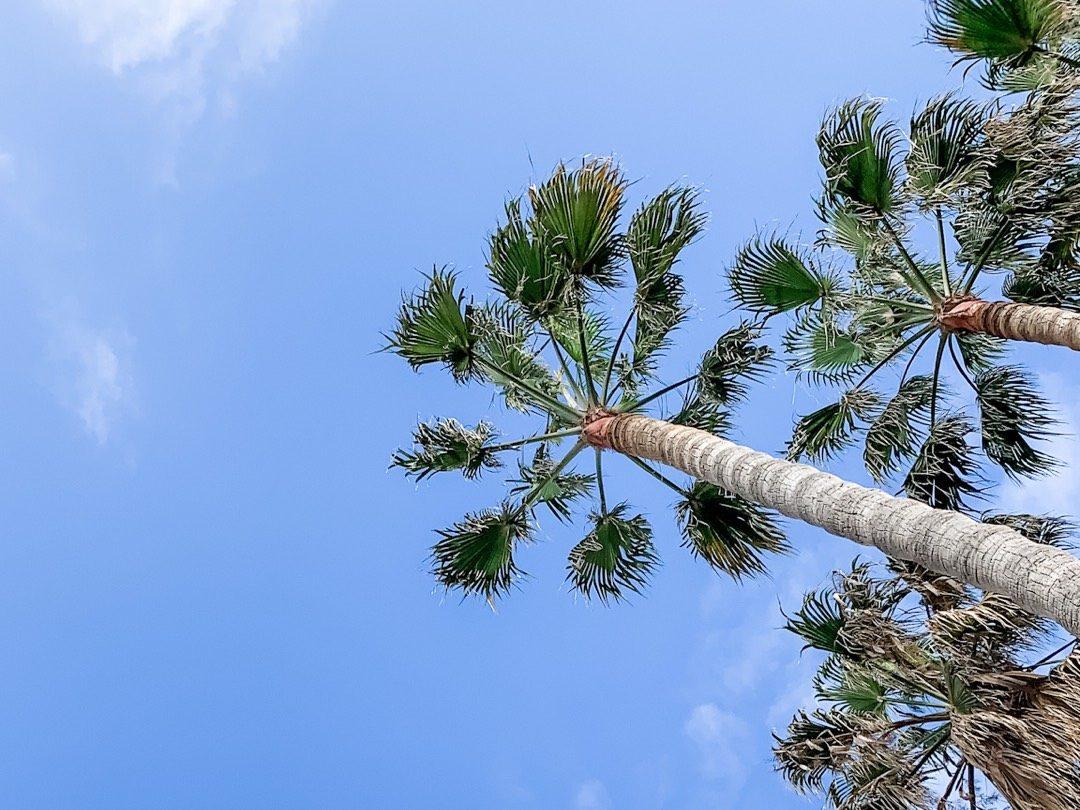 Die besten Tips für Deinen Mallorca Urlaub 2020