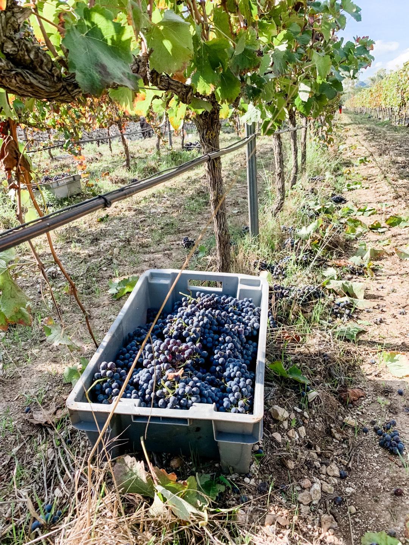 Mallorca Urlaub 2020 Weingut Besichtigung
