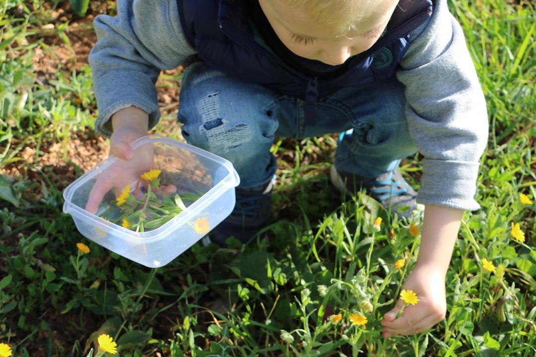 Wildpflanzen sammeln mit Uta und MY WILD GREENS