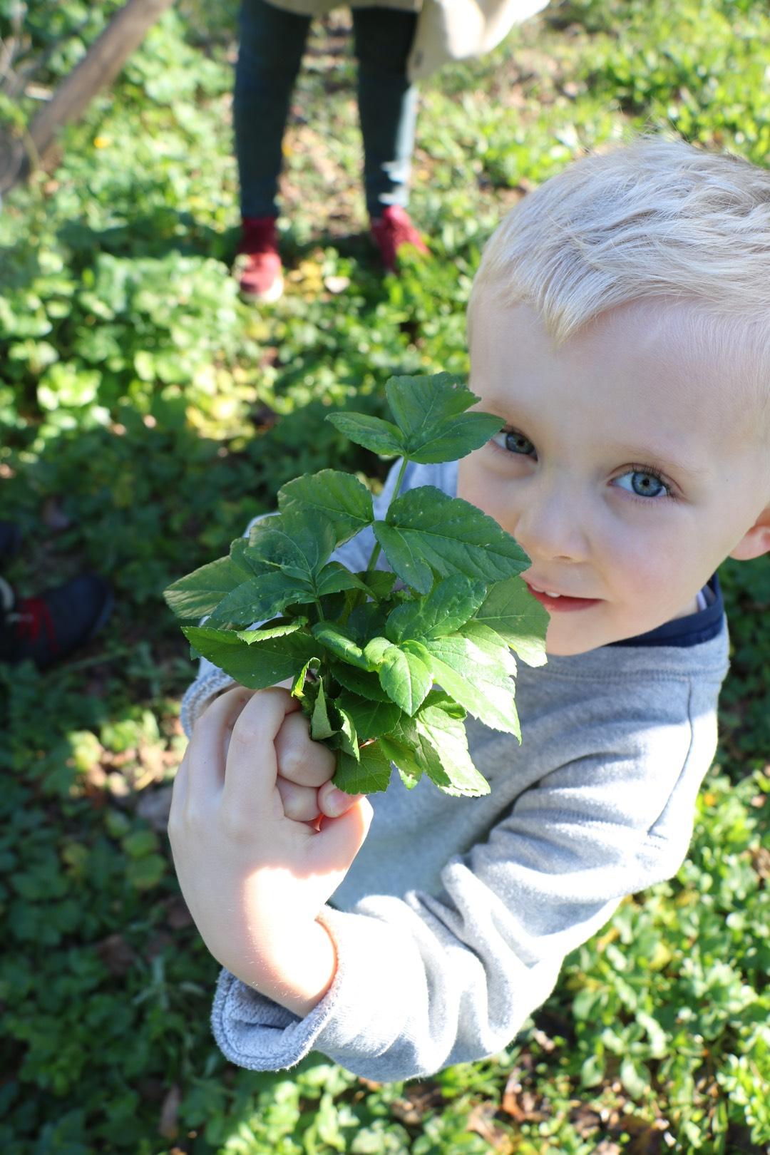 Vincent sammelt Pflanzen auf Mallorca mit MY WILD GREENS
