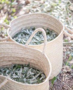 Olivenblätter für die Produkte des Dos Alquemistas