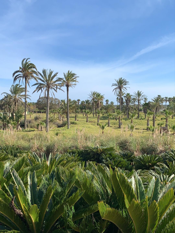 Die Natur auf Mallorca erholt sich nach der Krise