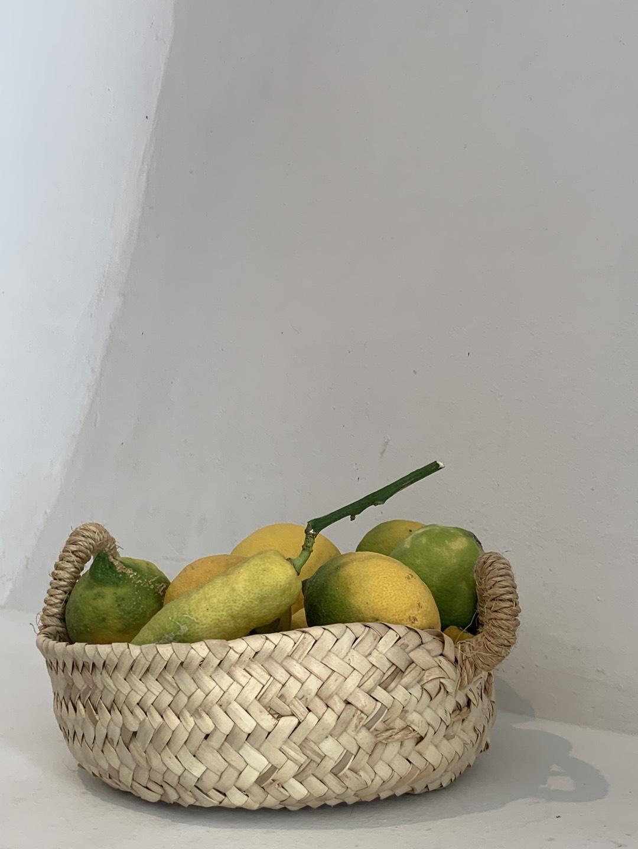 Selbstgepflückte Zitronen in Sa Cova Fornalutx