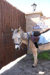 Eselwanderung Mallorca mit Can Paulino