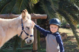 Eselwanderung auf Mallorca und Eselfinca Can Pauilno