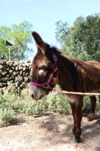 Eselwanderung auf Mallorca mit Hubert