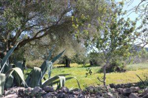 Wilde Natur auf Mallorca