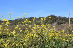 Umgebung von Llucmajor bei der Eselwanderung auf Mallorca