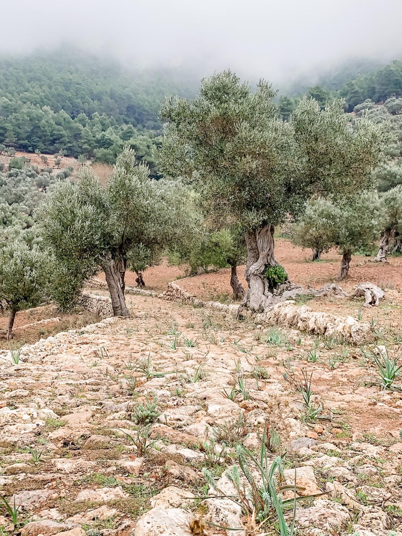 Landgut Son Moragues auf Mallorca