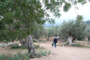 Son Moragues auf Mallorca