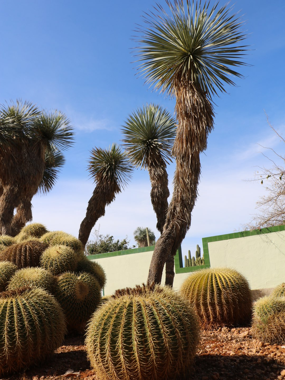 Kakteen Vielfalt auf Mallorca im Bonicactus