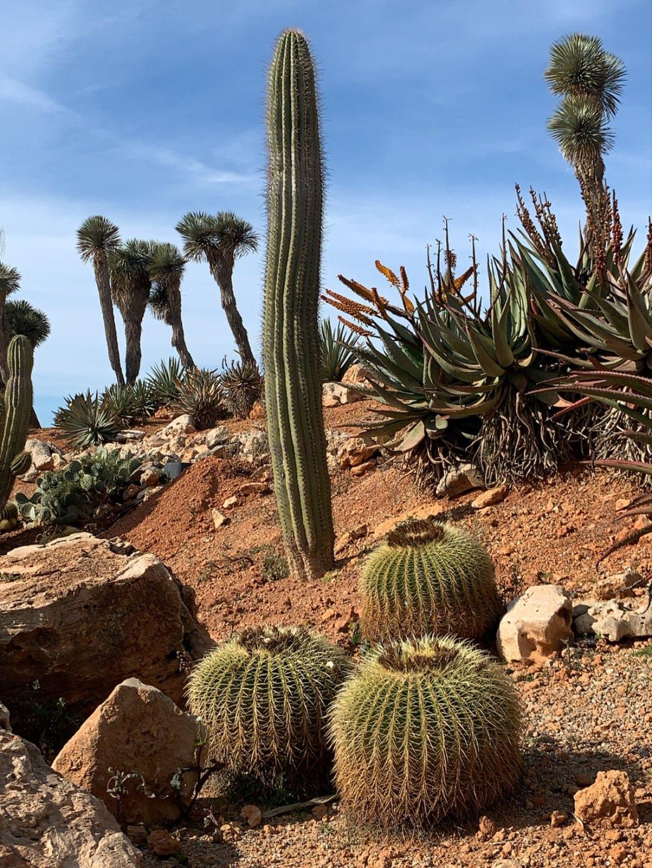 Botanicactus Mallorca Paradies für Naturliebhaber Kakteen