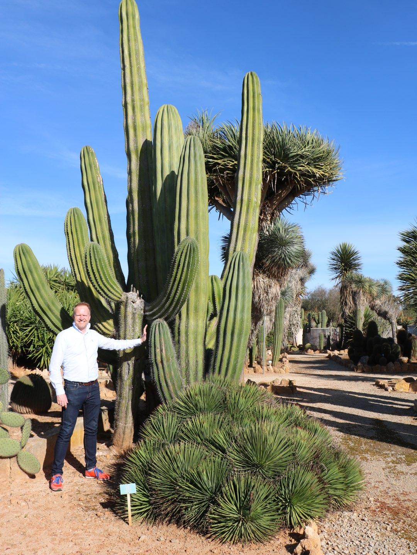 Riesige Kakteen im Botanicactus auf Mallorca