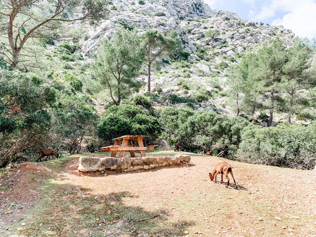 Ziegen in der Cala Murta