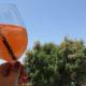 Die schönsten Restaurants mit Meerblick auf Mallorca