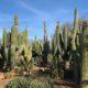 Botanicactus Mallorca Ausflüge Mallorca Tipp
